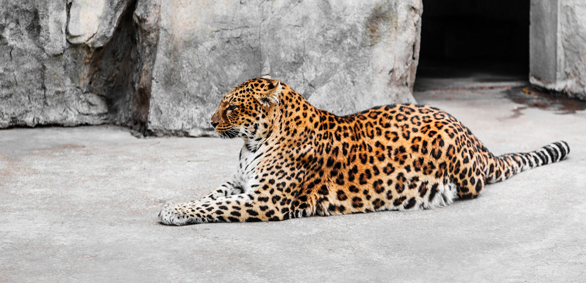IP Kamera Livestreaming für Zoo & Tiergärten